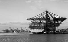 Estelle Maersk (Dan Elms Photography) Tags: maersk estellemaersk felixstowe bw blackandwhite blackwhite mono monochrome danelms danelmsphotography wwwdanelmsphotouk canon canon5dmkiii 5d 5dmkiii suffolk boat cargo freight maritime nautical port sea