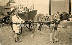 X990021 arbeitshund belgien (stadt + land) Tags: hunde hund bilder fotos arbeitshund historisch früher aufgabe transport alte fotografien