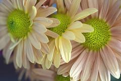 Tomando el Sol (José Ramón de Lothlórien) Tags: corazón heart polen pistilos interior flor flores flower flowers beauty belleza colores calidez