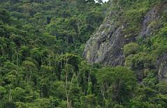 A mata e a pedreira (Márcia Valle) Tags: márciavalle nikon d5100 brasil minasgerais brazil verão summertime mataatlântica pedreira rock mountain floresta forest montanha green verde nature natureza