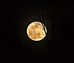 Snow Moon. (Steve InMichigan) Tags: snowmoon supermoon moon asanuma400mmf63tokinalens fotodioxm42eflensadapter