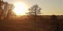 Sunset and Fenceline - Druridge (Gilli8888) Tags: cameraphone samsung s7 sunset druridge druridgeponds trees northumberland landscape sun light dusk fence fenceline silhouette