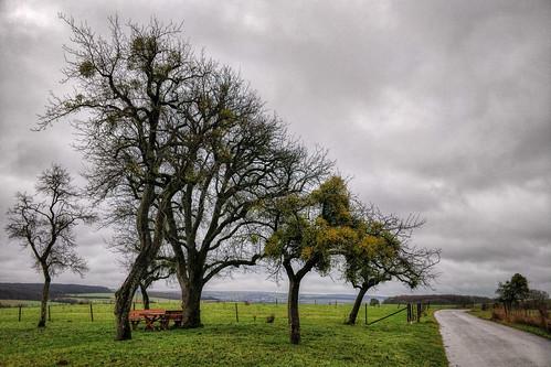 Tree triangle near Gostingen