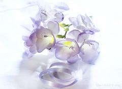 Falling in love ..... (Elisafox22) Tags: elisafox22 sony ilca77m2 100mmf28 macro macrolens telemacro lens freesias flowers purple lavender yellow sunshine tabletop blossom elisaliddell©2019
