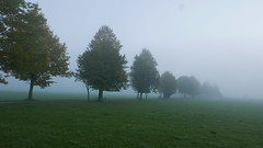 Bäume Nebel (Aah-Yeah) Tags: bäume baum nebel fog tree bodennebel grassau achental chiemgau bayern
