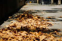 Last days of winter (Jose Rahona) Tags: ciudad city calle street hojas leaves urbana urban sombras shadow luz light season invierno winter