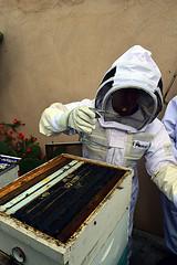 DSC_9760-61 (jjldickinson) Tags: nikond3300 107d3300 nikon1855mmf3556gvriiafsdxnikkor promaster52mmdigitalhdprotectionfilter longbeach bixbyknolls longbeachbeekeepers outreach class beeprepared insect bee honeybee apismellifera hive hiveinspection