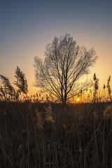 Sunset (Sebo23) Tags: sonnenuntergang sunset nature naturaufnahme natur landscape landschaft licht lichtstimmung light tree canonr canon16354l