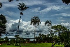 Bicentennial Park (Markus Branse) Tags: bicentennial park bicentennialparkdarwin northernterritory australia australien palmen palm palms palmtree tree trees palmtrees wolken clouds cloudy rasen lawin stadt stadtpark australie aussie oz tropen idylle wetter weer meteo weather tag