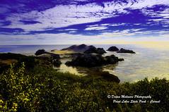 POINT-LOBOS_dsc617 (Donna Molinari Photography) Tags: carmel cats donna donnamolinari kauai maui molinari monterey oceanviews pacificgrove parrots photography pointlobos coast