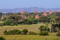 Temples de Bagan (Seb & Jen) Tags: bagan myanmar burma birmanie mandalayregion myanmarbirmanie oldbagan nyaungu royaumedepagan temple pagode pagoda taung guni