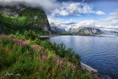 Reine coastline (marko.erman) Tags: lofoten norway nordland reine village fishermen sea mountains water clouds beautiful sony scenic idyllic nature outdoor outside travel popular quiet serenity drying flake pure transparency landscape nordic steep sunny flowers blossom blossoming flowering montagne pelouse ciel paysage eau lac champ baie
