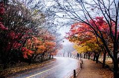 Autumn Rain (kimsin801) Tags: kimsin801 southkorea naejangsan autumn