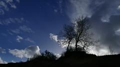 im Gegenlicht... (marionkaminski) Tags: deutschland germany alemagne alemana norddeutschland ostsee merbaltique merbaltic baum tree arbre arbol gegenlicht wolken nuages nubes clouds panasonic lumixfz1000
