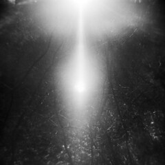 Silver Lake in Winter #19 (LowerDarnley) Tags: holga winter sun flare branches silverlake saugus ma breakheartreservation