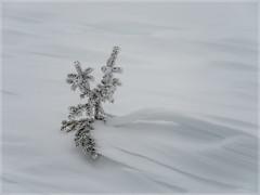 Winter Tree_93157 (uwe_cani) Tags: panasonic g9 finnland finland skandinavien scandinavia lappland lapland ylläs winter schnee snow natur nature outdoor landschaft landscape bäume trees nebel fog yllästunturi ylläsjarvi