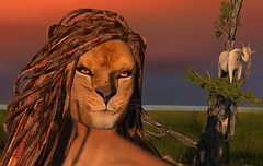 LION (work in process) (Alea Lamont) Tags: ndmd male lion skin appliers vista gerard bento head signature gianni mesh body