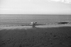 Running lab (Arne Kuilman) Tags: nikon fm3a vivitar 28mm luckyshd iso100 id11 7minutes homedeveloped stock analogue film egmondaanzee labrador dog hond