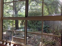 Our relaxing afternoon view from the lounge room (spelio) Tags: garden window livingthedream home shade view glass backyard transline sign