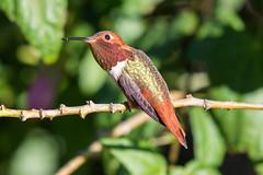 SC_Birds_12-26-18-6