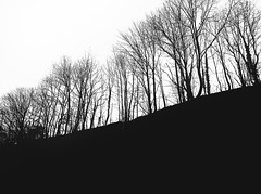Woodland (Rino Alessandrini) Tags: tree nature silhouette branch outdoors forest backlit blackcolor landscape backgrounds sky winter scenics season nopeople baretree white ruralscene woodland plant everypixel