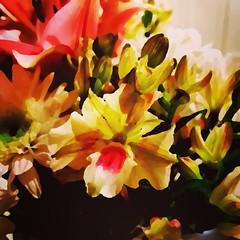 Impressionistic. #Takoma #dc #dclife #washingtondc #iphone #iPhonemacro #macro  #flower #flowersofinstagram (Kindle Girl) Tags: iphone takoma dc dclife washingtondc iphonemacro macro flower flowersofinstagram