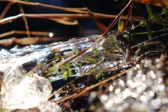 Tom's Pond (elisecavicchi) Tags: macro ice bokeh winter sunlight glass tom batsto pine barrens wharton state forest pineland light cranberry foliage explore sun bright pond trail hike