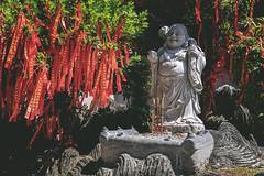 Maitreya Buddha statue (弥勒菩萨). (Andy @ Pang Ket Vui ( shootx2 )) Tags: buddha temple statue pray fujifilm x100f guan yin 弥勒菩萨 maitreya 斗湖 观音庙 smilling plant ribbon red blessing buddhism wealth
