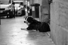 DSCF2107 (LexomIA) Tags: bordeaux street urbain bw nb streetphotography