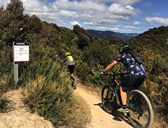 Freewheel (Wozza_NZ) Tags: wainuiomata wainuiomatatrailpark wellington lowerhutt mountainbike bike cycle singletrack wtp ride newzealand