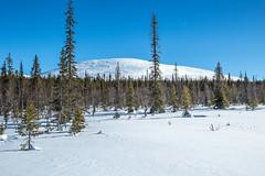 Tunturi / Fell (akkujala) Tags: finland lapinluonto lapland lappi lappishnature suomi talvi winter muonio pallas snow
