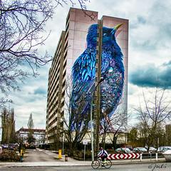 Starling (JuliSonne) Tags: streetart urbanekunst mauer wall graffiti colors scene urban pasteup stencil street berlin starling