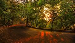Curved twilight (Debmalya Mukherjee) Tags: debmalyamukherjee canon550d 1018mm sunset dusk light trees road silhouette mumbai navimumbai parsikhill