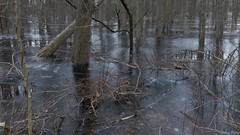 Frozen Forest (Patches Photo) Tags: swamp ice forest frozen trees woods winter frost cold