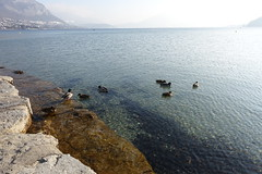 Ducks @ Plage d'Albigny @ Lake Annecy @ Annecy-le-Vieux (*_*) Tags: 2019 january afternoon winter hiver europe france hautesavoie 74 annecy savoie annecylevieux lacdannecy lakeannecy lac lake beach plage plagedalbigny