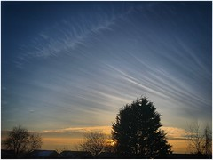 Late afternoon cirrus (Andy Stones) Tags: cloud cirrus sky skywatching weather weatherwatch nature naturephotography naturelovers natureseekers imageof image imagecapture photoof photography scunthorpe northlincolnshire northlincs lincolnshire nlincs trees silhouette