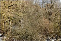würselen 98 (beauty of all things) Tags: würselen wurmtal wanderwega3 alterbahndamm flora gestrypp gestrüpp scrub winter schnee snow