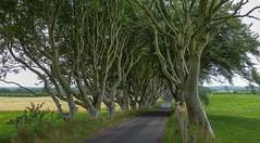 In Memory of the Fallen (yabberdab) Tags: darkhedges northernireland trees beech avenue