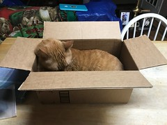 2019 064/365 3/05/2019 TUESDAY - Amazon was nice enough to send STEVE! a new box. (_BuBBy_) Tags: feline cat steve box amazon tuesday 365days days 64365 064365 365 64 064