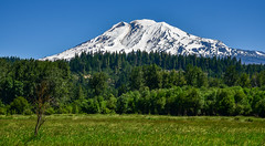 Mount Adams, Washington (maytag97) Tags: maytag97 nikon d750 mount mt adams washington state usa outdoor meadow tree forest blue sky nature natural landscape peak mountain white cascade summer snow sunny pacific climbing volcano mountaineering northwest highest outdoors scenic national glacier wa stratovolcano america range