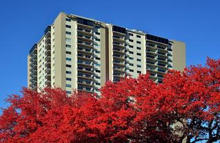 Lamar Tower (infrared)