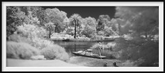 a white christmas (Andrew C Wallace) Tags: punt gondola boat royalbotanicgardens melbourne victoria australia blackandwhite bw infrared ir microfourthirds m43 olympusomdem5 lake heat hot thephotontrap