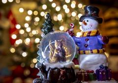 The Squirrel & The Snowman (Clayton Perry Photoworks) Tags: vancouver bc canada richmond winter christmas tree decorating lights explorebc explorecanada bokeh