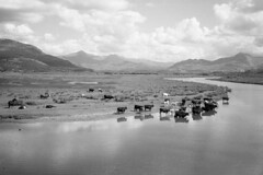 Porthmadog 1981 Wales (mr broddy) Tags: sky river valley cattle horse cow wales afonglaslyn britanniaterrace porthmadog estuary thecob bw