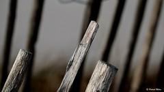 Fences (patrick_milan) Tags: detail fence cloture dune saint pabu finistère