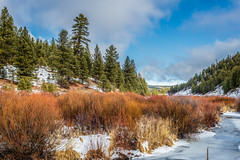 Silvies River, Oregon (paccode) Tags: solemn d850 colorful oregon winter river brush serious quiet tree hills landscape seneca unitedstates us