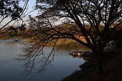 Kukkarahalli Lake (NovemberAlex) Tags: mysore colour india nature karnataka trees water