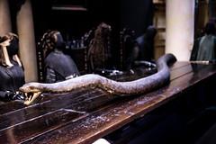 Nagini (Edd144) Tags: harry potter studio tour london philosophers stone chamber secrets prisoner azkaban goblet fire order phoenix half blood prince deathly hallows movies books film behind scenes magic wizard witch sorcerer