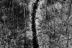 winterpath (ank1969) Tags: ank1969 natur nature winter bw sw wald forest weg path