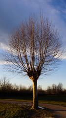 spoglio (claudio erre) Tags: albero trees natura nature sony 24105 fotografia photography lens mirrorrless camera